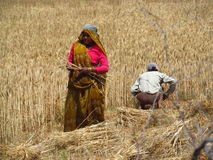 Indian woman working in the field Stock Images