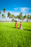 Indian women going to work at rice field. India, Tamil Nadu, near Thanjavour Stock Image