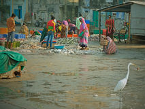 Indian women sorting the catch on a quayside Royalty Free Stock Images