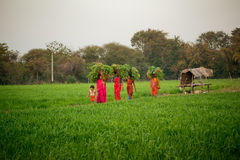 Indian women work at farmland Royalty Free Stock Photography