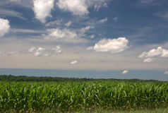 Indiana Corn Stock Images