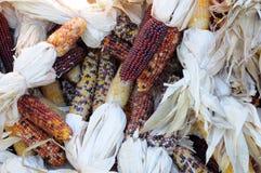 Indiana corn Royalty Free Stock Photography