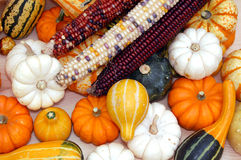 Indiana corn, mini pumpkin, and squash Stock Image