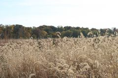 Indiana Field in the fall stock photos