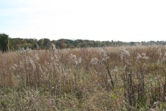 Indiana Field in the fall royalty free stock images