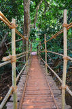Indiana Johns's style hanging bridge. Made of bamboo and ropes Royalty Free Stock Photos