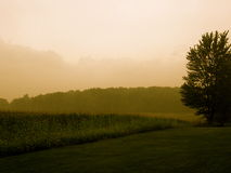 Indiana Morning. This is a picture of field on a morning in Indiana Stock Photography
