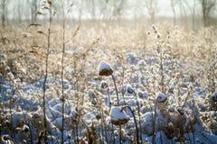 Indiana Snow Image stock