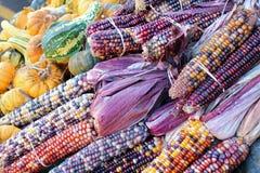 Indiana suszył kukurydzaną wiązkę fotografia stock