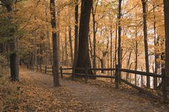Fence and Path in a Forest During Fall stock photos
