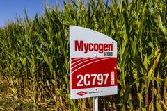Indianapolis - vers en septembre 2017 : Mycogen sème le Signage dans un domaine de maïs Les graines de Mycogen est une filiale de image stock