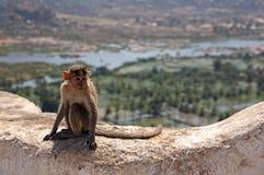 Indianin małpa Zdjęcia Royalty Free