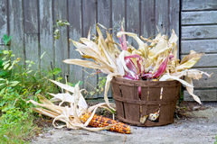 Indianischer Mais in einem Korb Stockfotos