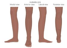 Indiano arabo africano di anatomia del fracture_Leg dell'osso royalty illustrazione gratis