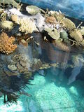 Indic Ocean. A view of the Indic Ocean in Lisbon Aquarium Stock Images