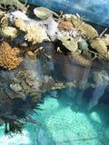 indic oceanu Obrazy Stock