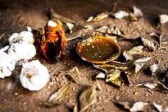 Indica Azadirachta, eller indisk lila eller ansiktsmask för sidor för NEEM-TRÄD med vitlökolja- och citronskivan Royaltyfri Fotografi