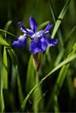 Indicador azul imagen de archivo