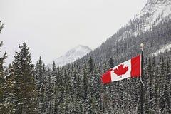 Indicador del vuelo de Canadá sobre bosque de la montaña foto de archivo