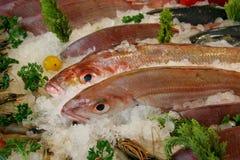Indicador dos peixes frescos Fotos de Stock Royalty Free