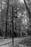 Indicador en el fondo de los árboles de abedul en parque Fotos de archivo libres de regalías