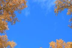 Indicador no céu Imagem de Stock