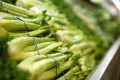 Indicador vegetal Fotografia de Stock Royalty Free