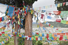 Indicateurs tibétains de prière sur l'arbre de cèdre Image stock