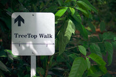 Indicatore dell'insegna della foresta Fotografia Stock Libera da Diritti