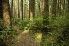 Indicatore luminoso attraverso una traccia della foresta Fotografia Stock Libera da Diritti