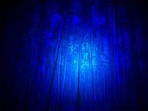 Indicatore luminoso blu magico nella foresta, notte, Fotografia Stock Libera da Diritti