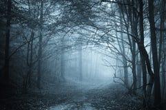 Indicatore luminoso blu in una foresta misteriosa con nebbia fotografie stock