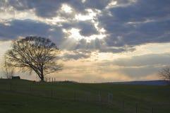 Indicatore luminoso che lucida su un albero Immagini Stock Libere da Diritti