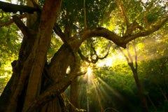 Indicatore luminoso del Sam di esposizione del sole del cielo di luce solare della natura fotografia stock