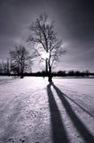 Indicatore luminoso del sole di inverno Fotografia Stock Libera da Diritti
