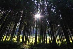 Indicatore luminoso della foresta Fotografie Stock Libere da Diritti