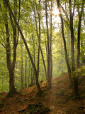 Indicatore luminoso di autunno Fotografia Stock