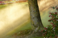 Indicatore luminoso di gloria alla foresta Fotografia Stock