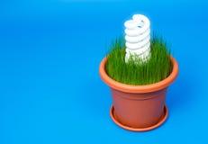 Indicatore luminoso di lampadina bianco di spirale di eco in un POT di fiore Fotografia Stock