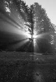Indicatore luminoso di mattina immagine stock libera da diritti
