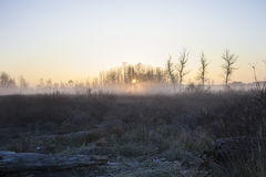 Indicatore luminoso di mattina Fotografia Stock Libera da Diritti