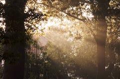 Indicatore luminoso di mattina Fotografie Stock