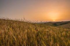 Indicatore luminoso di primo mattino in Toscana Immagine Stock
