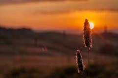 Indicatore luminoso di primo mattino in Toscana Fotografia Stock Libera da Diritti