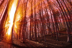 Indicatore luminoso di Sun immagine stock