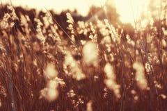 Indicatore luminoso di tramonto sulle piante con mólto il bokeh della o Fotografia Stock