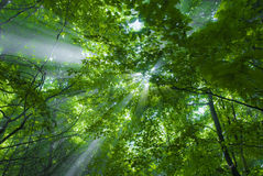 Indicatore luminoso e foresta Fotografia Stock Libera da Diritti