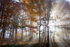 Indicatore luminoso e nebbia Fotografia Stock Libera da Diritti