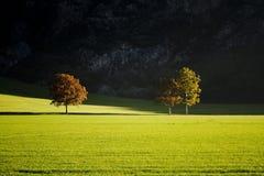 Indicatore luminoso ed alberi Fotografie Stock