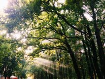 Indicatore luminoso ed alberi fotografia stock
